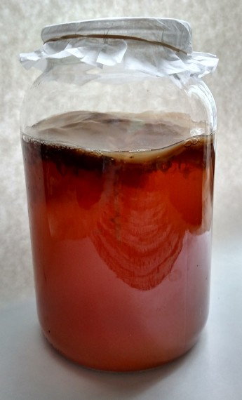 black tea with a SCOBY yeast visible