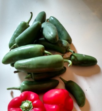 Jalapeno bell