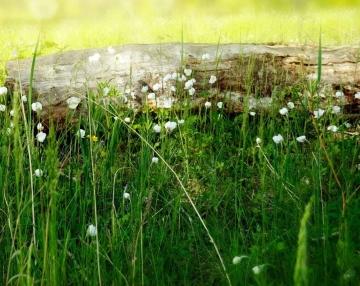Rabbit food, grass, plant based
